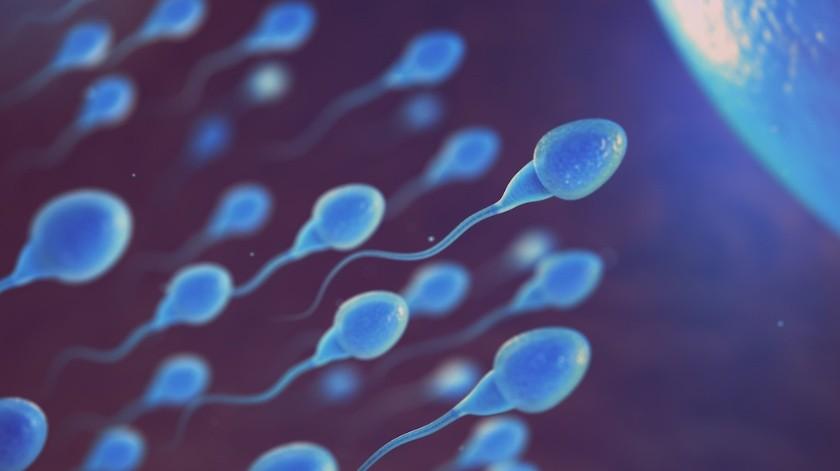 Los espermatozoides nos han 'engañado' durante 300 años, ahora por fin sabemos cómo se mueven(Shutterstock)