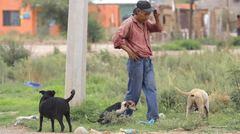 Un hombre camina acompañado de sus perros y revisa el alambrado en un poste de la invasión Lirios, para poder conectar energía eléctrica a su hogar y se le ve sin cubrebocas.(Julián Ortega)