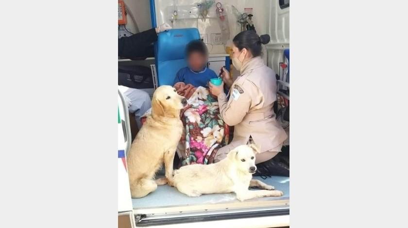 Niño se pierde y sobrevive la noche más fría, gracias que lo abrazaron sus perritos(Tomada de la red)