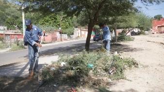 Llaman a dar mantenimiento a árboles para evitar accidentes por caídas
