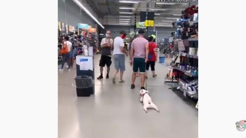 Un bullterrier al parecer no disfruta ir de compras