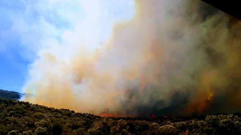 Atienden tres incendios forestales en Ensenada(Cortesía)