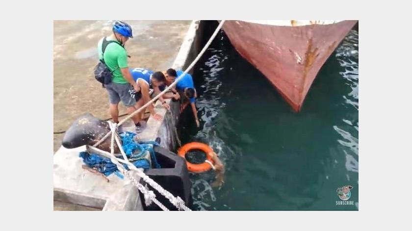 El animal cayó al mar pero fue rescatado a tiempo