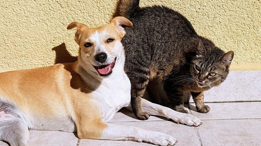 Desmienten rivalidad innata entre perros y gatos(Pixabay)