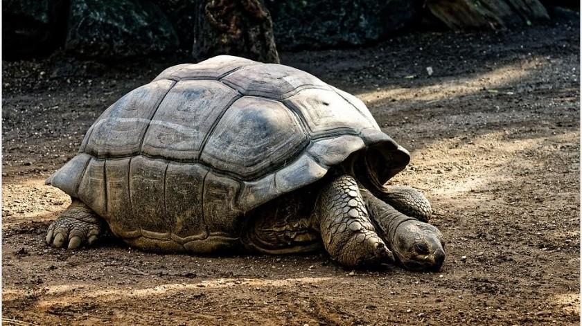 Detienen a mujer con más de dos mil huevos de tortuga en Chiapas(Pixabay)