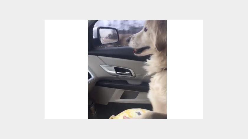 Una perrita es rescatada y le brinda una muestra de cariño a su adoptante