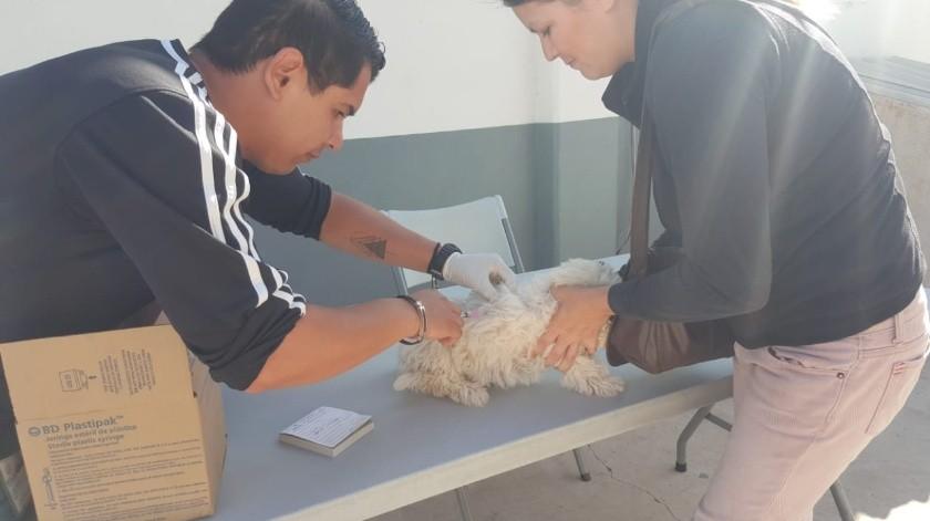 Cuentan veterinarias con vacuna antirrábica gratuita en Ensenada(Jayme García)
