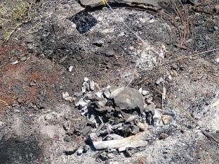 Activistas localizan 4 cuerpos calcinados