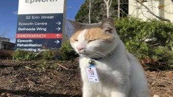 Gato se convirtió en guardia de seguridad en hospital