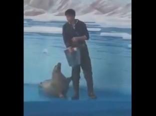 Esta foca se ha hecho viral en internet por la manera en que pide comida