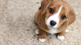 Por qué los perros pueden fijar la vista todo el tiempo a una persona
