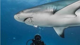 Libera de anzuelos en hocico a varios tiburones