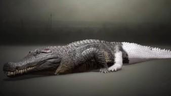 Los cocodrilos prehistóricos eran tan grandes que se alimentaban de dinosaurios