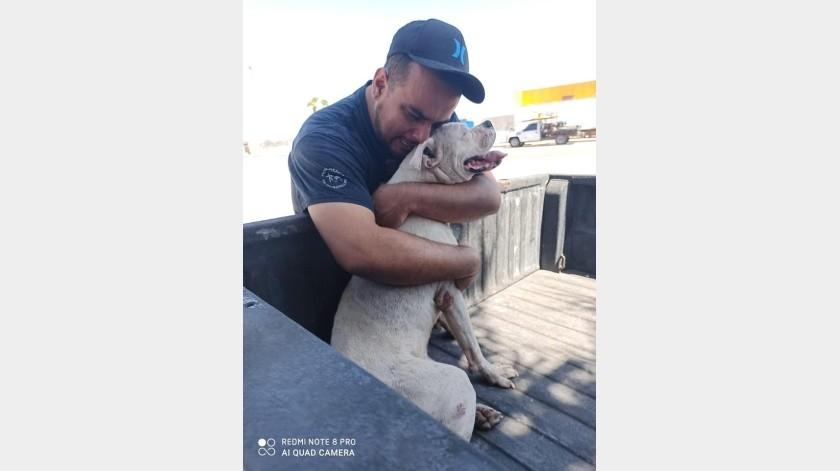 """""""Con mi corazón destrozado y mi alma llena de dolor"""": Hombre da el último paseo en carro a su perro con cáncer antes de dormirlo"""