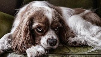 Cómo quitar las garrapatas en perros y prevenirlas