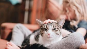 Convivir con tu gato te hace la vida más ligera y feliz