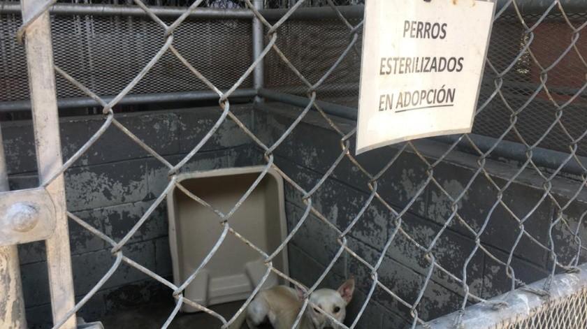 Hay 80 mascotas en CAM.(Ashley García)