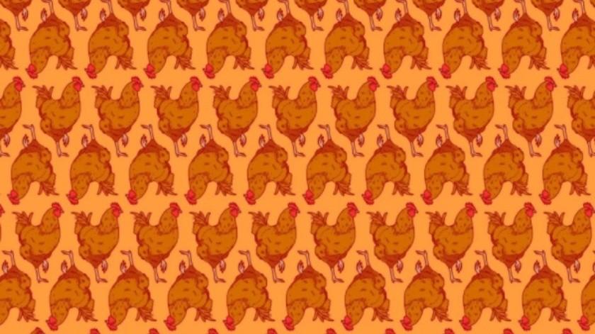 Encuentra las gallinas perdidas entre los gallos en este reto viral(Noticieros Televisa)