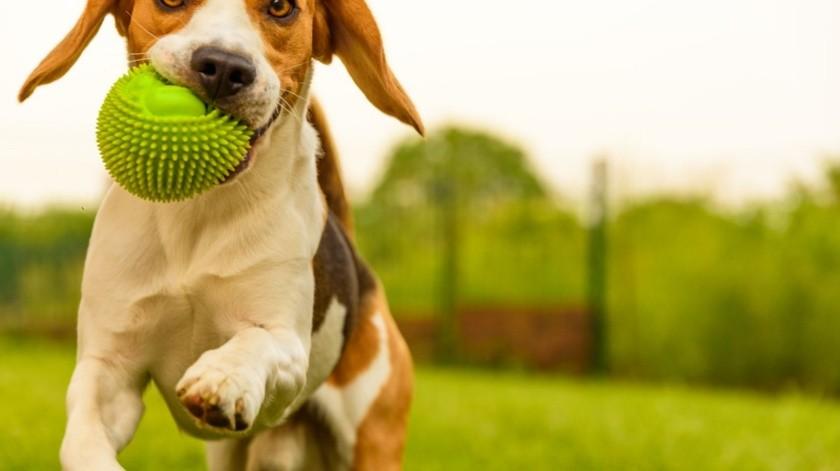 Conoce tus responsabilidades como dueño de una mascota(Tomada de la Red)