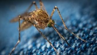 Advierten de mortal y rara enfermedad transmitida por mosquitos en Michigan