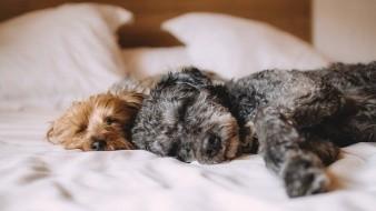 ¿Es bueno prender el aire acondicionado para los perros?