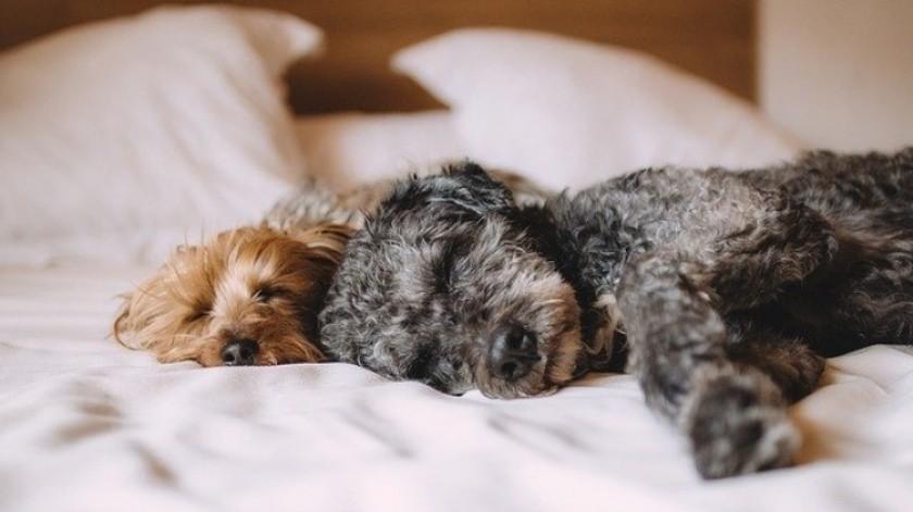 ¿Es bueno prender el aire acondicionado para los perros?(Tomada de la Red)