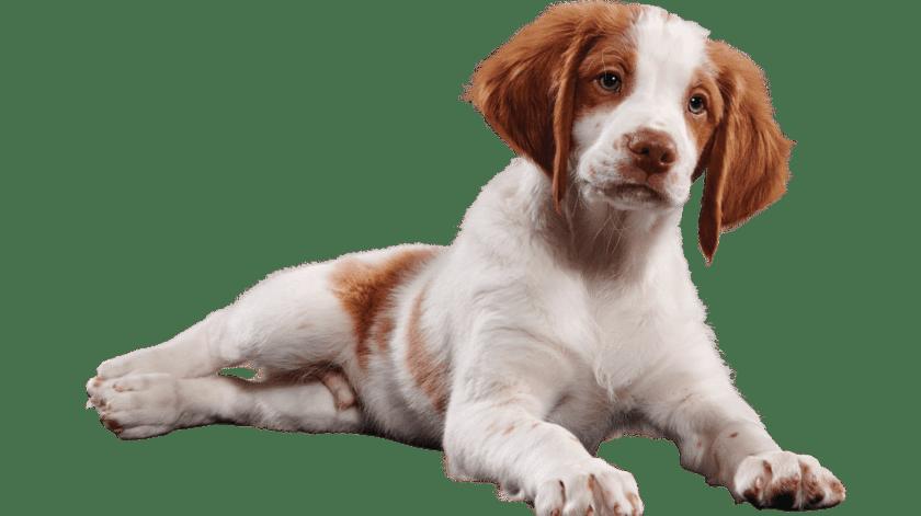 ¿Qué debe tener un kit de emergencia para tu mascota?(Cortesía)