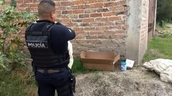 Abandonan a recién nacida en Celaya; policías la rescatan de caja de cartón
