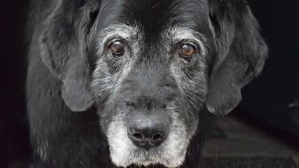Consejos para el cuidado de mascotas mayores