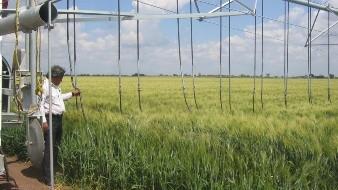 ¿En dónde hay más agricultura con riego tecnificado en Sonora?