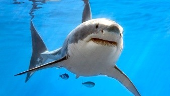 Tiburón ataca un barco