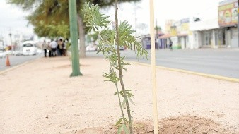 Intercambiarán 100 árboles, 80 de palo verde y 20 palo fierro, por un kilo de ayuda y estos víveres serán destinados al Banco de Alimento.