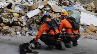 Beirut: Silencio y esperanza entre escombros a un mes de explosión