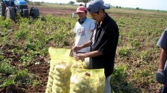 Tiene sector agrícola de Sonora buen cierre de ciclo: Sagarhpa