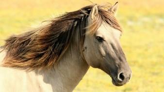 Los matan o les sacan sus ojos: caballos atacados en Francia