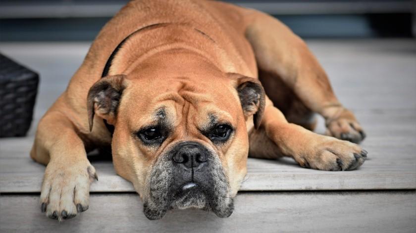 """El dictamen establece que """"los elementos policiales que realicen el rescate al interior de un domicilio, deberán asegurar la integridad física de los animales."""
