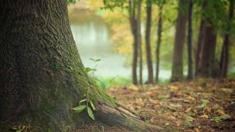 La saponina, un árbol endémico de Chile que podría ayudar a crear vacuna contra la Covid-19