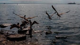 El derrame ocurrió las playas de Carabobo y el Parque Nacional Morrocoy en Falcón, uno de los balnearios más populares del país.
