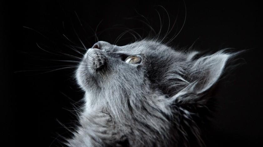 Descubrió que estaba embarazada gracias a su gato(Pixabay)