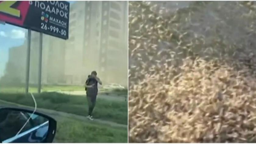 VIDEO: Nubes de insectos invaden ciudad de Siberia