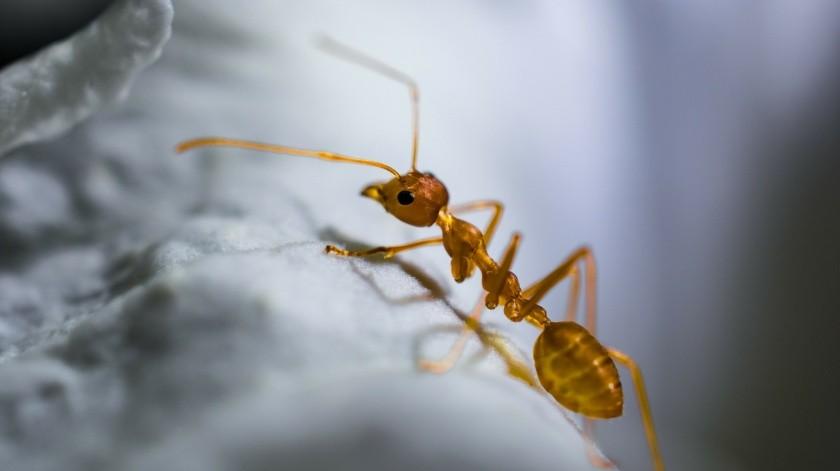Los mejores tips para evitar que tu cocina se llene de moscas y hormigas(Pixabay)