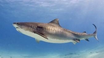 Captura un tiburón de 136 kilos con una caña de pescar
