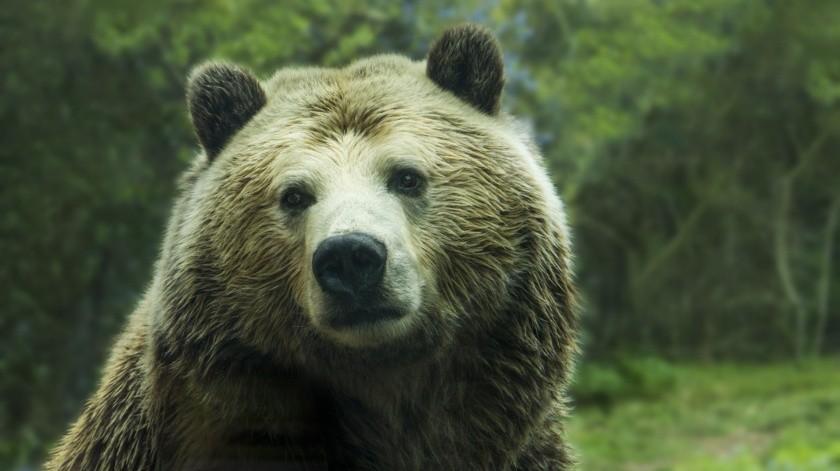 """El oso, hallado en el noreste de Rusia por pastores de renos, es considerado como un hallazgo de """"gran importancia""""."""