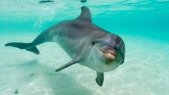 Graban a delfines enamorados, nadan tomados de las aletas