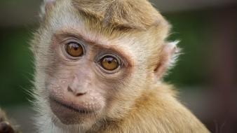 Con más de 100 vacunas en desarrollo en todo el mundo, no hay suficientes monos para todos, advierten expertos.