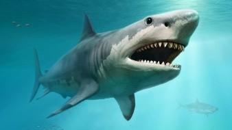 Surfista encuentra un diente de tiburón incrustado en su tabla