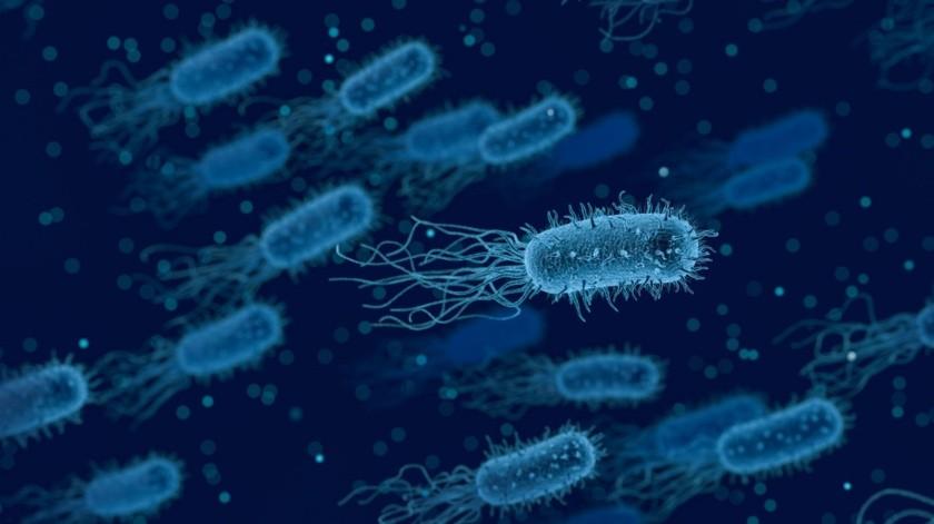 La brucelosis es una de las zoonosis más extendidas transmitidas por los animales y, en las zonas donde es endémica, la brucelosis humana tiene graves consecuencias para la salud pública.