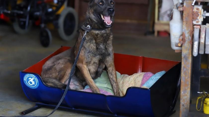 Construye asociación camas para perros con material reciclado(Daniel Resendiz)
