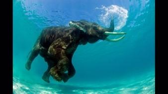 Toxinas en el agua mataron a cientos de elefantes en Botsuana, afirman autoridades locales