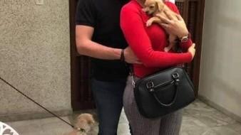 ¡Macabro! Investigan a pareja que adoptaba perritos para alimentar a sus víboras